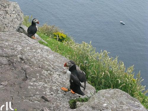 fauna isla skelling