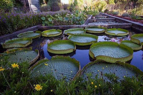 jardin botanico de padua 3