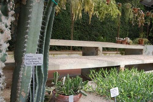 jardin botanico de padua 4