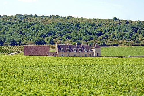 Dijon 3