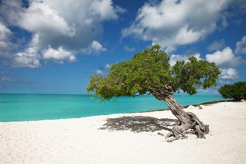 Los mayores atractivos de la isla de Aruba