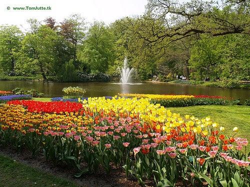 El jard n keukenhof en holanda una obra de arte floral for Jardin keukenhof