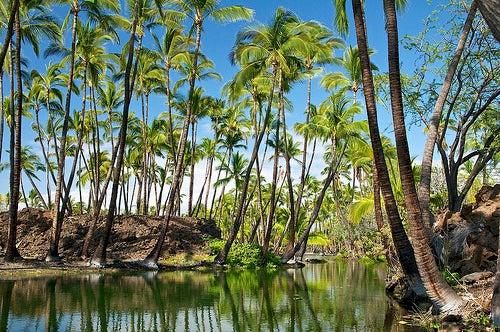 isla grande hawai 3