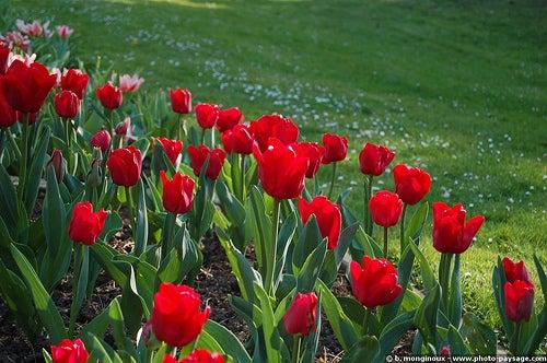 parque floral de paris 5