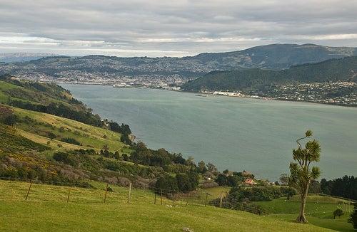 Dunedin 2