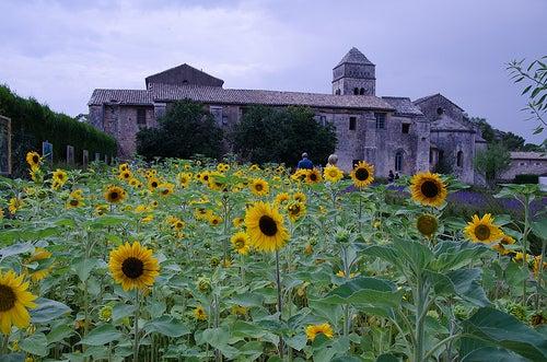 Saint-Rémy de Provence en Francia, el lugar idílico que unió a Nostradamus y Van Gogh