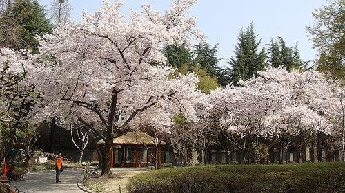 Entre naturaleza y acero, Daegu en Corea del Sur es el lugar perfecto