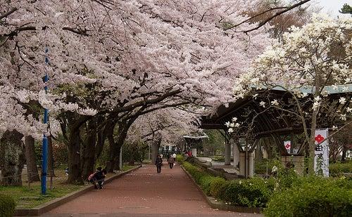 Sendai 2