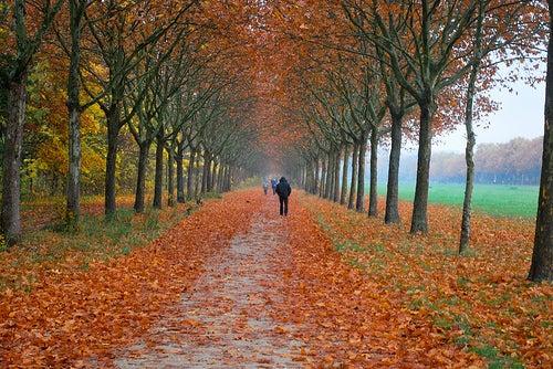 ¿Conoces el Bois de Vincennes en París?