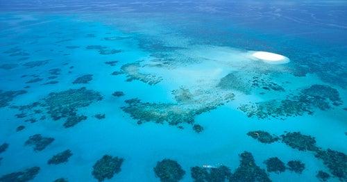 Gran Barrera de Coral 3