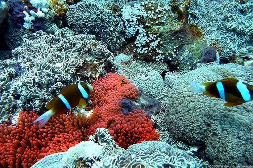 Gran Barrera de Coral 4