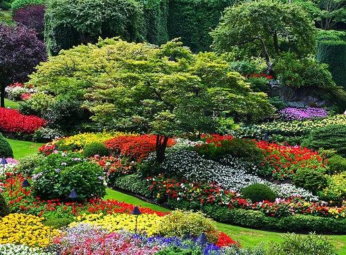 Descubre los Jardines Butchart, los jardines más bonitos del mundo