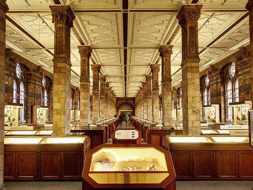 Museo de Historia Natural, uno de los lugares más visitados de Londres