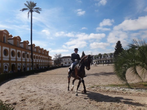 caballos andaluces 2