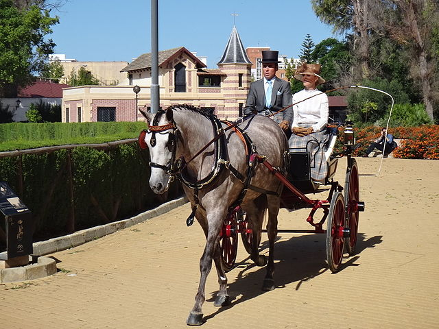 caballos andaluces 3
