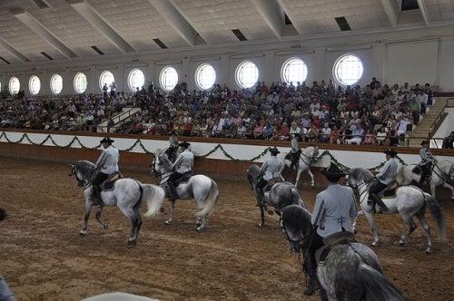 Te enseñamos cómo bailan los caballos andaluces
