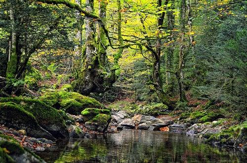 La Selva de Irati en España, un universo natural de luz y color