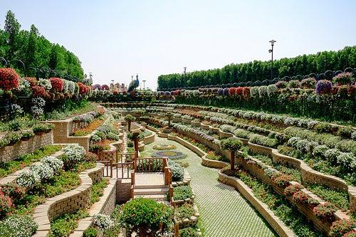 Miracle Garden 3