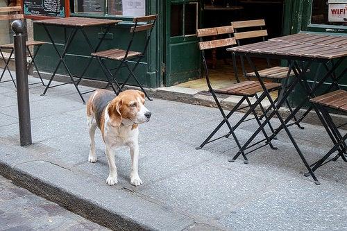 viajar-con-tu-perro