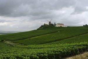 ruta del vino en francia