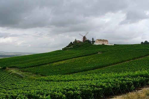 La deliciosa ruta del vino en Francia