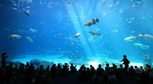 5 acuarios espectaculares que te encantarán