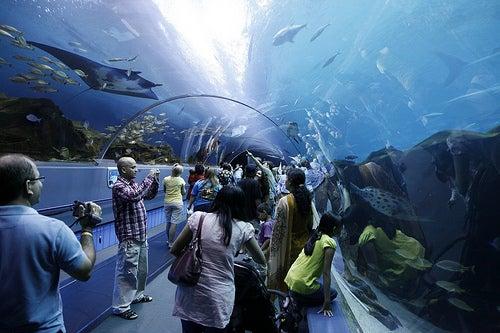 acuarios-espectaculares-3