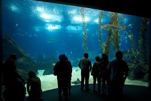 acuarios-espectaculares-4