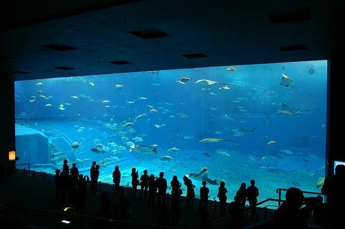 acuarios-espectaculares-5