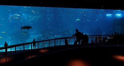 acuarios-espectaculares-7