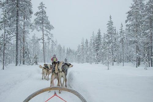 Excursión con Huskies o Renos
