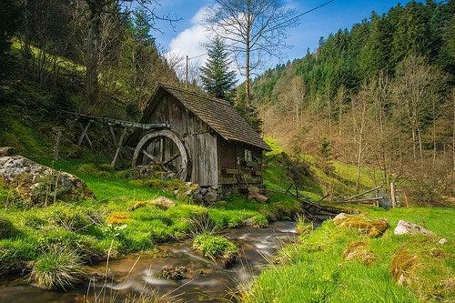 Bosques más hermosos de europa 2